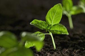Hvad er de to faktorer, der påvirker Hvilke typer af planter vokser i et økosystem?