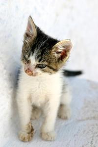Kost til Cat med diarré