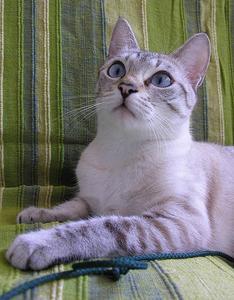 Skjoldbruskkirtel medicin til katte
