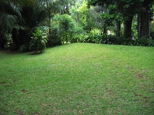 græsfrø til sandjord