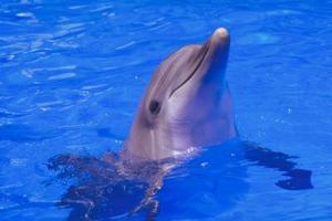 Hvilken type pleje Er en Baby Dolphin brug for?