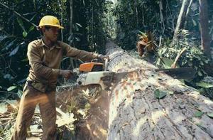 Miljømæssige virkninger af Safrol Oil Extraction