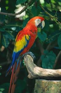 Arter og Papegøjer
