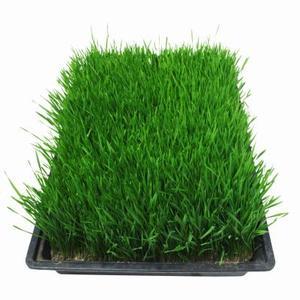 Jeg plantning græsfrø hjælp svampekompost: skal jeg nødt til at tilføje jord?