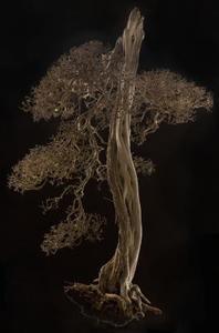 Planter til Opret en Miniature Woodland Feel