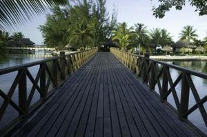 Miljømæssige virkninger af træbroer