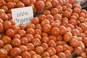 Hvor hurtigt tomatfrø Grow?