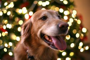 Bivirkninger af Prozyme til hunde