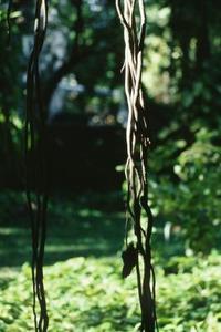 Hvordan man kan trække Leaves & Vines