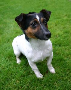 Hvorfor har Hund Urin Burn Grass?