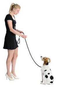 De bedste typer af fløjter for Hunde Træning