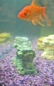 DIY Fish Tank Dekorationer