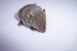 Normale funktioner som en mus Lever
