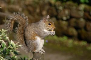 Squirrel Art Aktiviteter