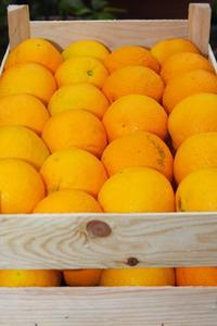 Hvordan kan jeg bruge Appelsiner at slippe af lopper?