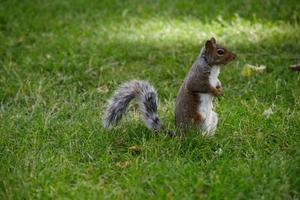 Sådan Hold Egern Off My Lawn