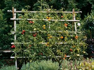 Hvordan man laver en have espalier