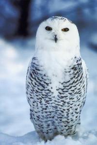 Indiske legender af Owl
