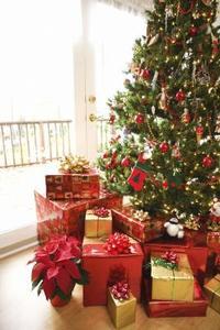 Kan du plante et snit juletræ?