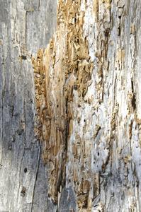 Hvordan til at dræbe tørt træ termitter