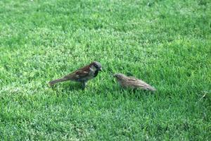 Hvordan man kan stoppe fugle fra at spise græsfrø