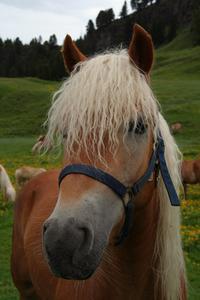 Sådan bruges Horse Shampoo på Human Hair