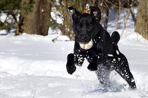 Bivirkninger af Dasuquin til hunde