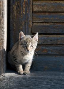 Hvordan til at bygge en isoleret kat hus