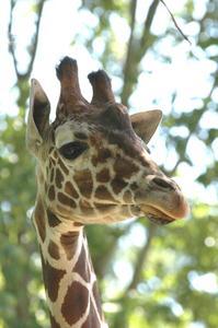 Hvordan man laver en giraf Face Mask for Kids