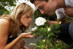 Hvordan at vokse duftende roser