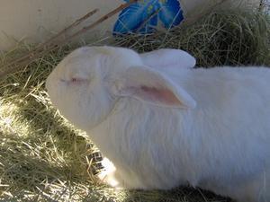 Hvad er den grusomhed af dyreforsøg?