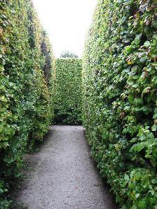 Planter til Hedge