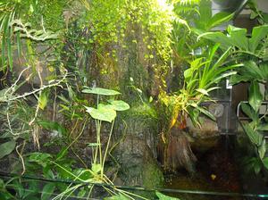 De forskellige typer af ikke-Blomstrende Planter