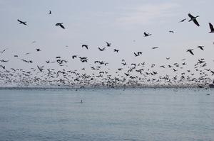 Hvad Lyder skræmme fugle?