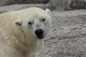 Planter og dyr, der lever i Tundra