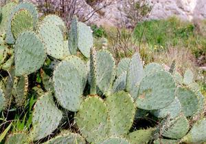 Liste over Arizona Naturressourcer
