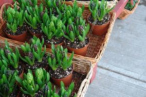 Typer af Terra Cotta Garden Pots
