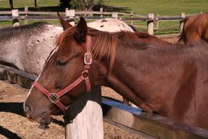 Equine many behandling