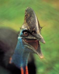 Bird Beak Crafts