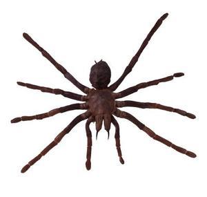 Typer af store edderkopper i New Hampshire