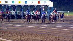 Hvordan man beregner hastighed tal for hestevæddeløb