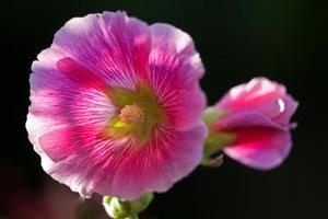 Mærkede Dele af en blomstrende plante