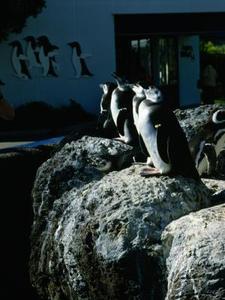 De typer af fisk pingviner spise