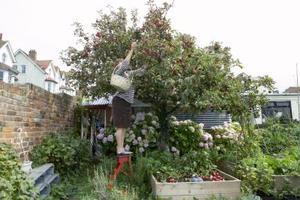 Må Apple Trees mister deres blade om vinteren?