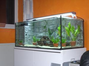 Sådan Filter Sand Støv fra et akvarium