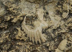 Sådan finde fossiler i Virginia