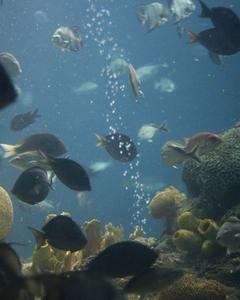 Hvordan reducerer jeg alkaliske niveauer i et akvarium?