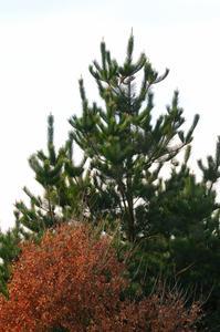 Primær & Sekundær Plant Growth