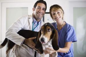 Sådan behandler hunde hud mider