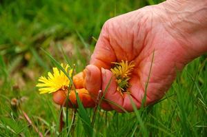 Hvilke blomster vokser bedst i Maine løbet af sommeren?